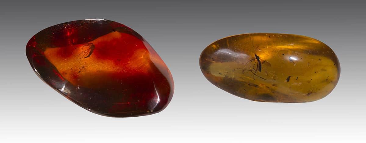 Moustiques pris dans de l'ambre datant de deux périodes différentes (Miocène et Éocène)